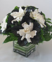 White and green gardenia flower arrangement in a glass cube vase.