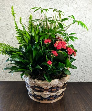 Assortment of green and blooming plants in a woven basket container.