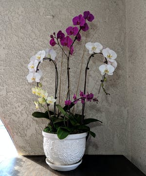 Assortment of mini orchid plants in a white ceramic container.