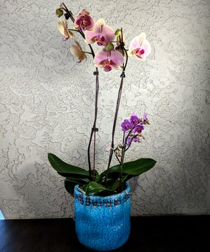 Assortment of mini orchid plants in a ceramic container.