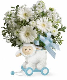 Blue Sweet Little Lamb in Rowland Heights, Whittier, Glendora, CA