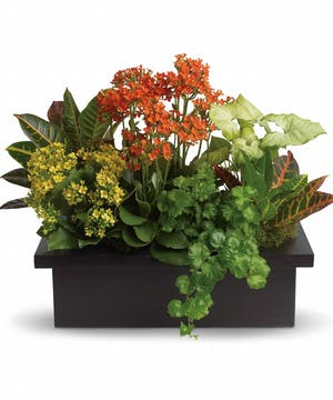 Goldfinger crotons, bright yellow and orange kalanchoes and green nephthytis and ivy in a modern black container.