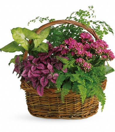 Garden basket filled with green and blooming plants.