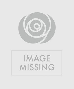 A wondrous ornament design that features holiday colors in a vase selected by us
