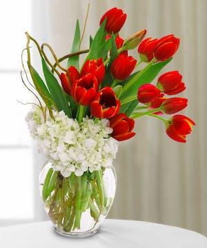 Tulips & Hydrangea