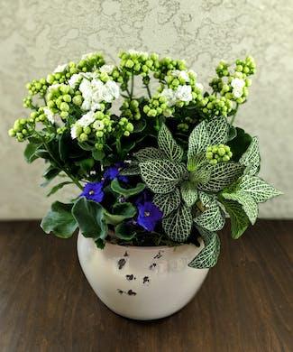Green Plant Delivery Whittier & Glendora (CA) Same-day Florist