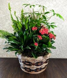 Seasonal Basket Garden