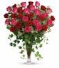 Premium (30 Red/Pink Roses)